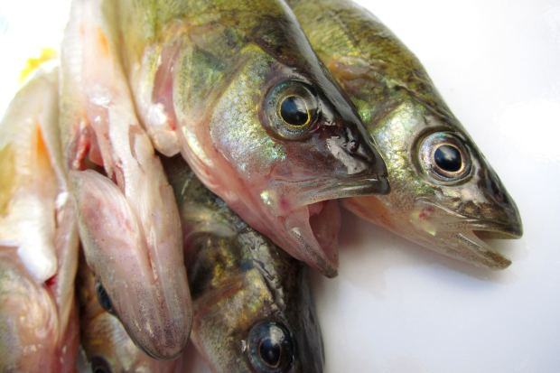 High seafood intake is linked to higher gout risk.