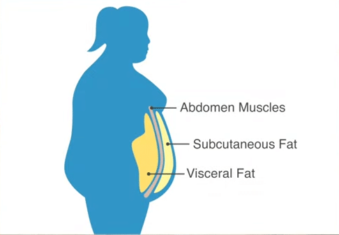 Image showing belly fat.