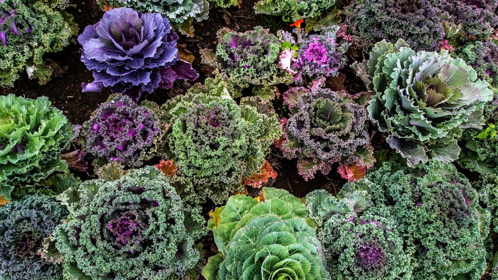 Kale and Gout: Is Kale Good for Gout?